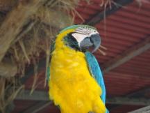 Parrot!
